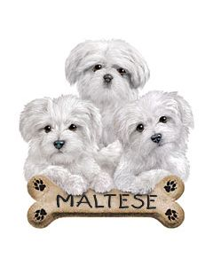 Perstransfer: Maltese puppies - H2