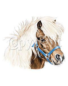 Perstransfer: Pony - H2