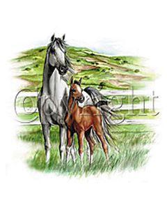 Perstransfer: Twee paarden - H1
