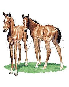Perstransfer: Horse pasture mates - H2